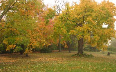 Autumn (Jake's imagery Writing)